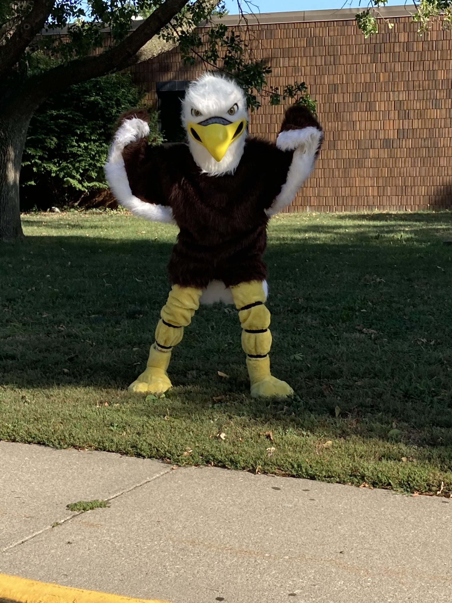 Eagle at the materials distribution day!